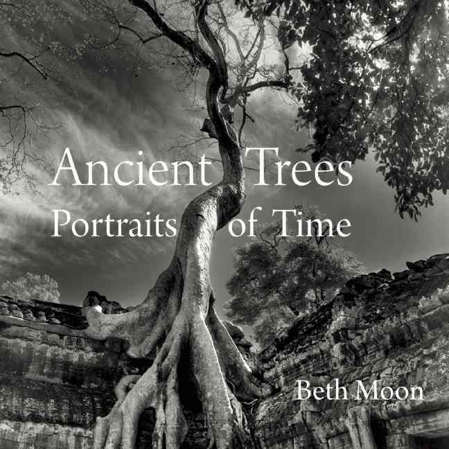 Ancient Trees By Moon, Beth